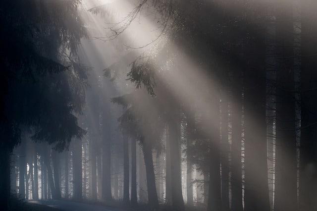 fog-693401_640