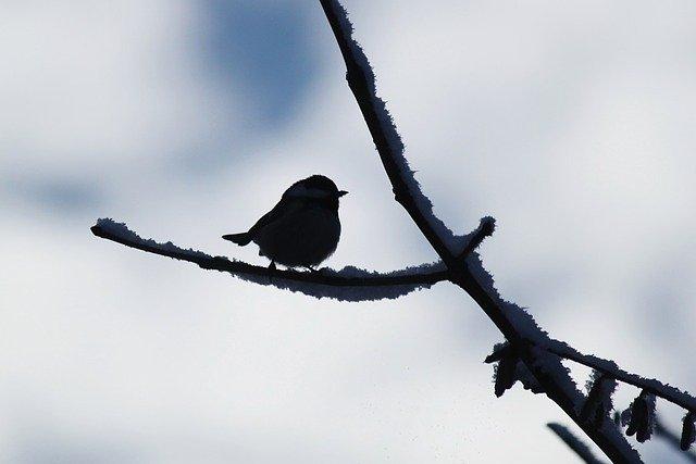 bird-437500_640