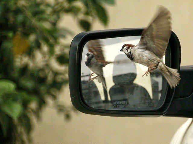 sparrow-320416_640