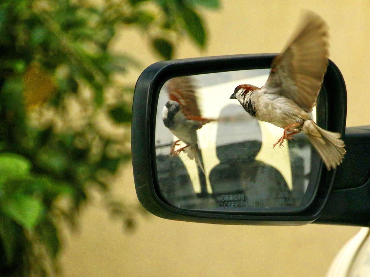 sparrow-320416_1280
