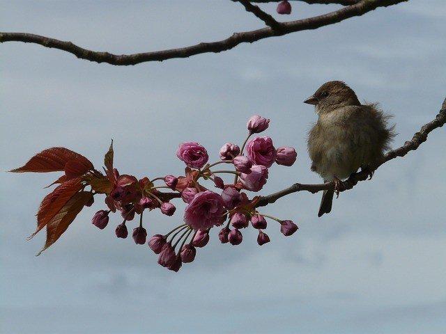 bird-52132_640
